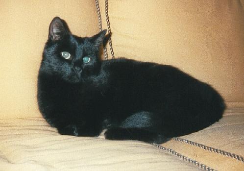 A photo of Felix, my cat.